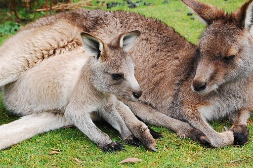 Reasons Why A Trip To Kangaroo Island Is Perfect For You